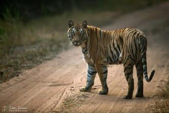 Best wildlife photography tours
