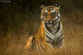 wildlife photography tours india